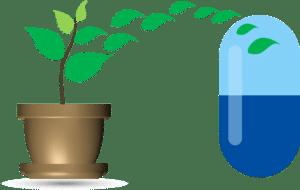 cannabis phytopharmacy